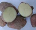 Patata Rossa di Sulcina